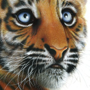 Tiger Paintings - Beauty of my Mothers Eyes by Jurek Zamoyski