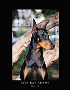 Doberman Art Posters - Beauty Poster by Rita Kay Adams