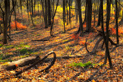 Forest Floor Photo Posters - Beauty Within Poster by Bill  Wakeley