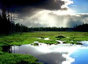 Frank Houck - Beaver Meadow