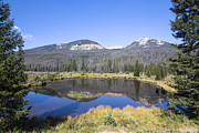 Heaven Posters - Beaver Pond at Rocky Mountain National Park Poster by Ellie Teramoto