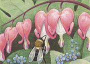 Insect Drawings Prints - Bee And Bleeding Heart Print by Amy S Turner