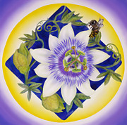 Passionflower Painting Prints - Bee and Passion Flower Print by Marcia  Perry