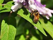 Bee At Work Print by Kaye Menner