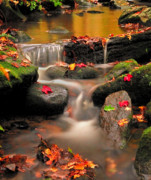 Autumn Leaves Acrylic Prints - Bee Brook-Gentle Autumn Cascade Acrylic Print by Thomas Schoeller