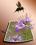 Free Mixed Media Prints - Bee Free Print by Shane Bechler