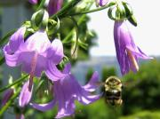 Bee Photos - Bee-Line 5 by Will Borden