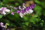 Bee On Flower Print by Kaye Menner