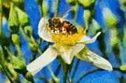 Paint Paintings - Bee on white flower by George Atsametakis