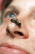 Labelled Prints - Bee On Womans Nose Print by Volker Steger