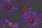 Asters Metal Prints - Bee with Asters on gray Metal Print by ShaddowCat Arts - Sherry