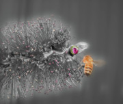 Selective Colouring Prints - Beeautiful Print by Kelly Jones