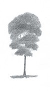 Landscape Prints Prints - Beech Tree Drawing Number One Print by Alan Daysh