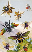 Nobilis Framed Prints - Bees Framed Print by Sheila Terry