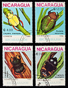 Nicaragua Framed Prints - Beetles stamps collection. Framed Print by Fernando Barozza