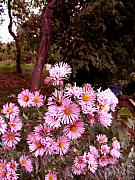 Asters Metal Prints - Beeze In The Breeze Metal Print by The Stone Age