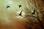 Birds Photo Metal Prints - Before a Winter Sky Metal Print by Bob Orsillo