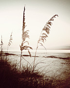 Sea Oats Framed Prints - Before Day-Sepia Play Framed Print by Chris Andruskiewicz