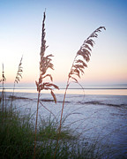 Sea Oats Framed Prints - Before Day Vanilla Pop Framed Print by Chris Andruskiewicz