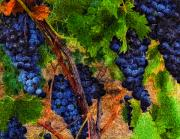 Wine Vineyard Mixed Media Prints - Before Hi-C Print by John Mueller