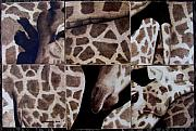 Giraffe Pyrography - Before by Jo Schwartz