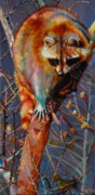 Raccoon Drawings - Before the Storm Raccoon by Kelly McNeil