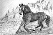 Wild Horses Drawings - Before the West was Won by Shelley Blair