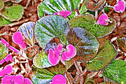 Begonia Print by EricaMaxine  Price