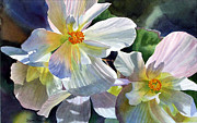 White Flower Paintings - Begonia with Rainbow Shadows by Sharon Freeman