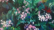 Carol Mangano - Begonias at Longwood
