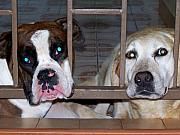 Dogs Digital Art Metal Prints - Behind Bars Metal Print by Vijay Sharon Govender