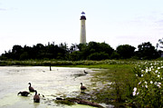Geese Digital Art Prints - Behind the Cape May Lighthouse Print by Bill Cannon