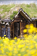 Timber House Prints - Behind Yellow Flowers Print by Heiko Koehrer-Wagner