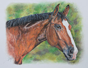 Thoroughbred Pastels Framed Prints - Belgian Warmblood Albie Framed Print by Terry Kirkland Cook