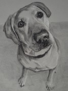 Labrador Retriever Drawings - Bella Bean Labrador Retriever by Ruthie Sutter