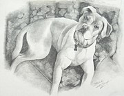 Boxer Drawings Posters - Bella My Pup Poster by Joette Snyder