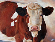 Calf Paintings - Belle by Laura Carey