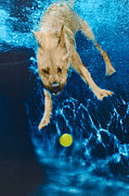 Diving Dog - Belly Flop by Jill Reger