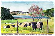 Oreo Painting Prints - Belted Galloway Art  Maine Cows in May Print by Catinka Knoth