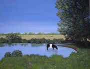 Pasture Scenes Painting Posters - Belted Galloway in Pond Poster by Candace Shockley