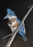 Kingfish Prints - Belted Kingfisher Print by Kenneth M  Kirsch