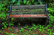 Lawn Chair Prints - Bench and Flowers- St Lucia. Print by Chester Williams
