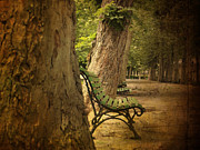 Park Bench Prints - Bench in a park Print by Bernard Jaubert