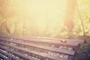 Park Bench Photos - Bench In Autumn Sun by by Christopher Wesser - www.sandbox-photos.com
