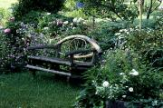 Cultivate Framed Prints - Bench In Garden Framed Print by David Chapman