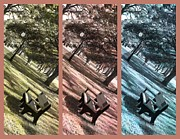Decorative Benches Photo Framed Prints - Bench in the Park Triptych  Framed Print by Susanne Van Hulst