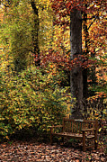 Yellow Leaves Prints - Bench in the Woods Print by John Rizzuto