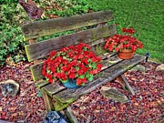 Yard Pyrography Prints - Bench In The Yard Print by Linda Gesualdo