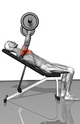 Human Body Part Art - Bench Press Incline (part 1 Of 2) by MedicalRF.com