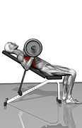 Human Body Photos - Bench Press Incline (part 2 Of 2) by MedicalRF.com